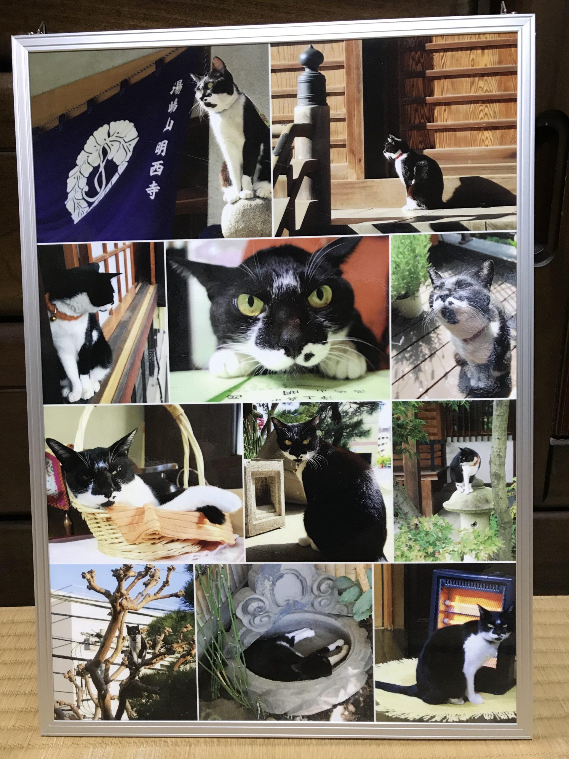 明西寺看板猫 ツルベ(♀)とお別れして半年経ちました。